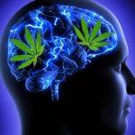 Studio: L'uso di Cannabis non ha impatto significativo sulle strutture cerebrali