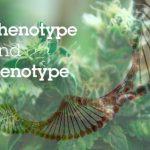 Genotipi e Fenotipi della Cannabis: Che cosa rende unica una varietà?