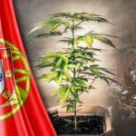 Portogallo: il partito socialdemocratico sostiene la legalizzazione totale della cannabis