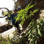 Studio: Effetto del regolare uso di cannabis sulla capacità di andare in bicicletta