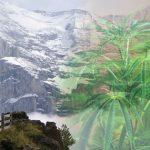 Svizzera: a breve la realizzazione di progetti pilota per la distribuzione della cannabis?