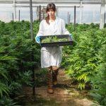Israele: Approvato il primo vaporizzatore certificato per l'uso medico della cannabis
