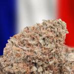 Secondo un Avvocato, in Francia il THC è già Legale dal 2007