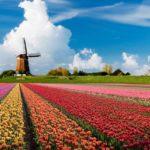 L'Olanda verso la regolamentazione ufficiale della Cannabis?