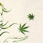 Nuovo Studio: chi usa cannabis utilizza meno alcolici, meno antidolorifici, meno prodotti per l'insonnia