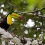 La Costa Rica sarà il prossimo paese latinoamericano a depenalizzare la cannabis?