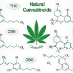 Cannabinoidi: una guida definitiva (aggiornata 2018)