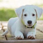 Una nuova Ricerca Italiana trova nei gangli spinali dei cani i recettori per i cannabinoidi