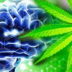 Studio: nessuna associazione tra uso di cannabis e comportamento suicidario in persone con disturbi psichiatrici