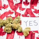 Il Canada ad un passo dalla legalizzazione della Cannabis dopo il voto favorevole del Senato
