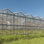 CROP CORP. firma una collaborazione in Italia per la coltivazione di canapa industriale