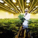 Israele: quale futuro per il mercato della Cannabis?