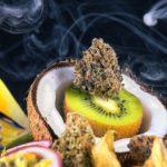 """Studio: i Terpeni della cannabis sono """"terapeuticamente meravigliosi"""""""