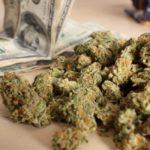 """Contaminazione della Cannabis """"illegale"""" proveniente dalla Criminalità: la Regolamentazione è la Soluzione"""