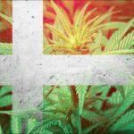 Danimarca: il Governo della nazione ottimizza i sussidi per la cannabis ad uso medico