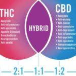 Studio: THC e CBD combinati con Temozolomide possono aiutare a trattare il Glioblastoma