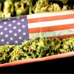 Stati Uniti e Cannabis: nel 2019 previste svolte decisive