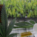 Studio: l'olio di cannabis riduce le convulsioni e migliora la qualità della vita delle persone con la sindrome di Dravet