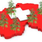 Svizzera verso l'apertura di un progetto pilota di vendita di cannabis ad uso ricreativo