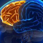Studio: la cannabis può migliorare la memoria nelle persone con il morbo di Alzheimer